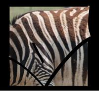 zebra-check-png24