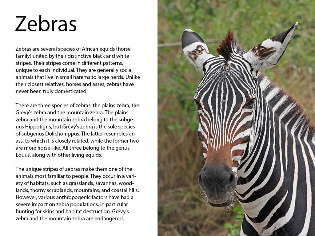 zebra-page-whole-jpg